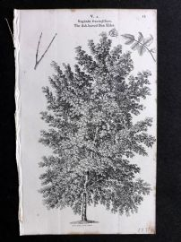 John Loudon 1838 Antique Botanical Tree Print. Ash Leaved Box Elder